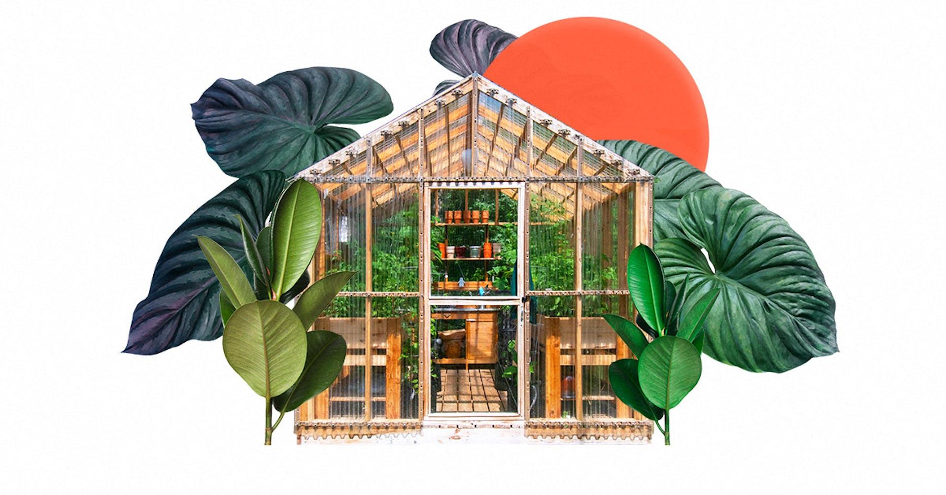 Descubre los materiales para hacer un invernadero casero económico y sencillo