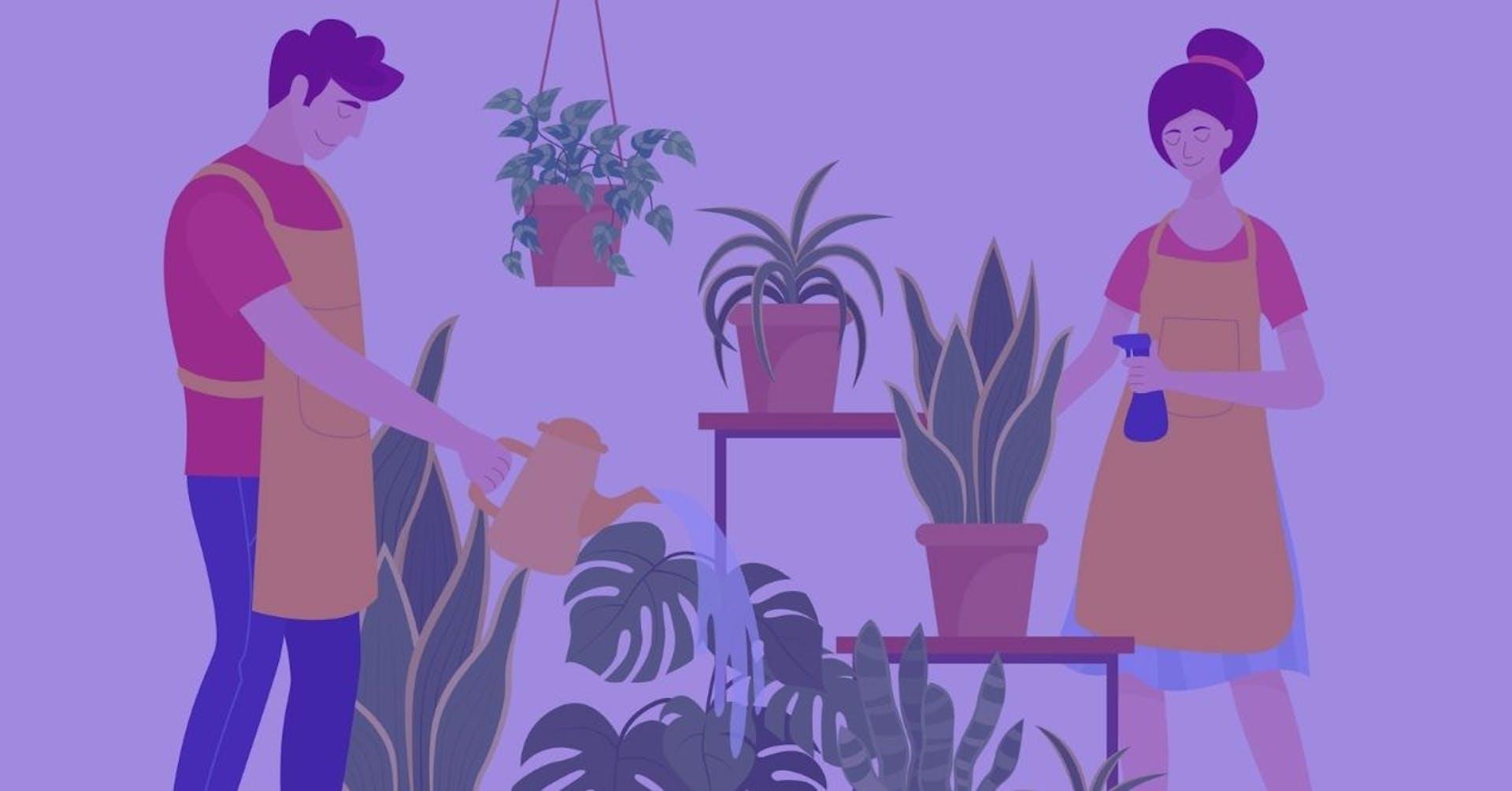 Plantas de interior: cuidados necesarios para una vida duradera