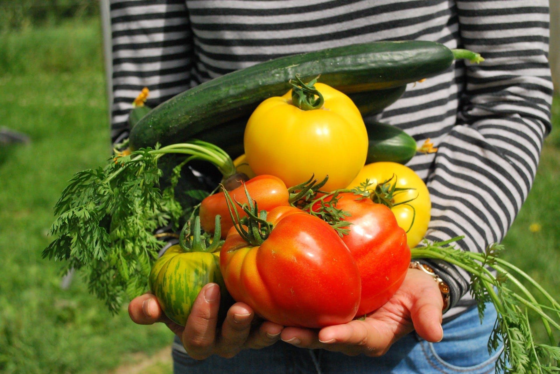 Todo lo que necesitas saber para hacer tu propio huerto orgánico en casa