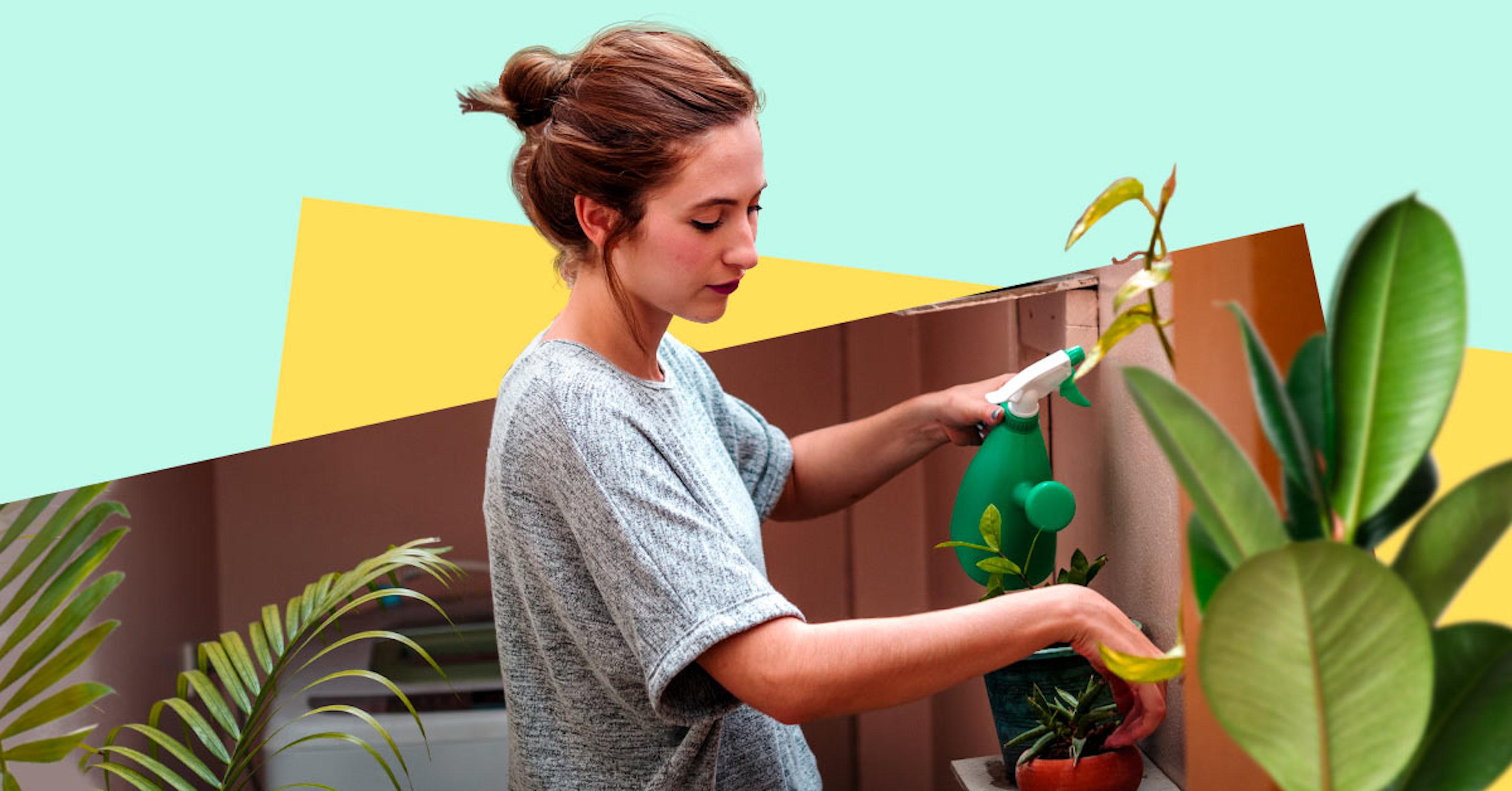 Purifica el aire de tu hogar con estas plantas