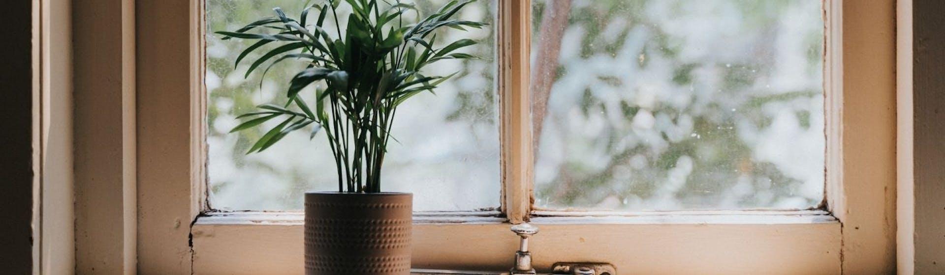 No dejes de tener plantas en la sala ¡Dale vida a tu hogar!