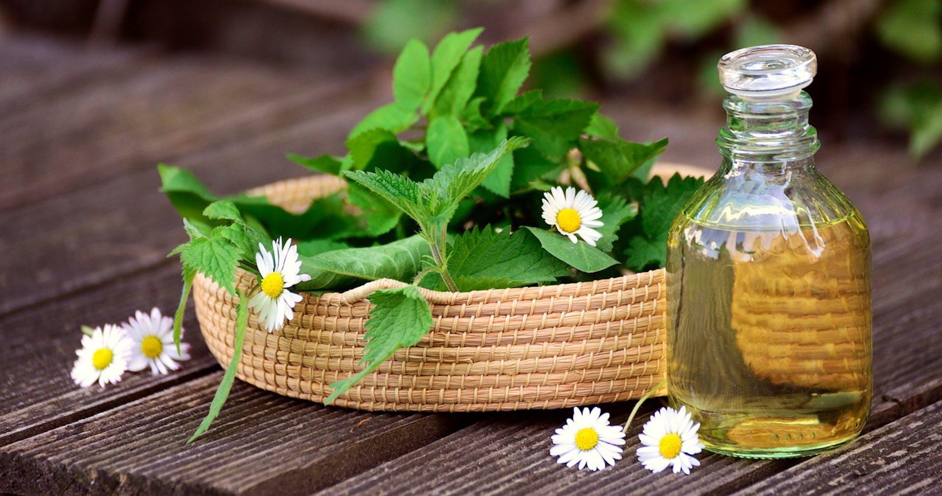 ¿Cuáles son las plantas medicinales y para qué sirven? Descubre sus poderes curativos