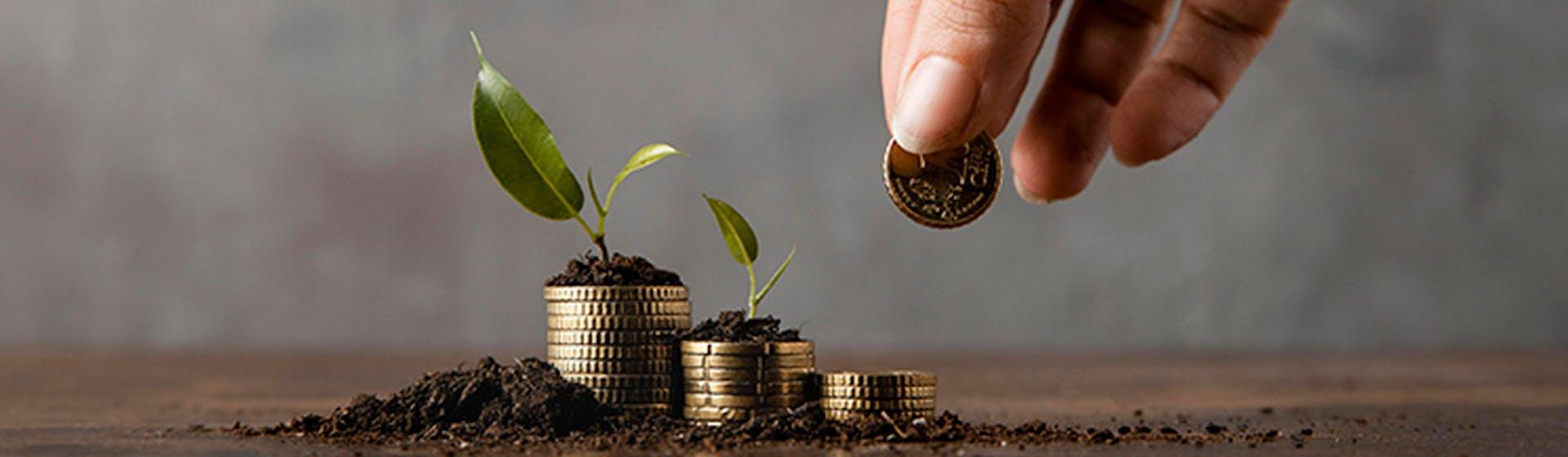 Los 4 pilares de la inteligencia financiera: ¡Tu ruta hacia la libertad financiera!