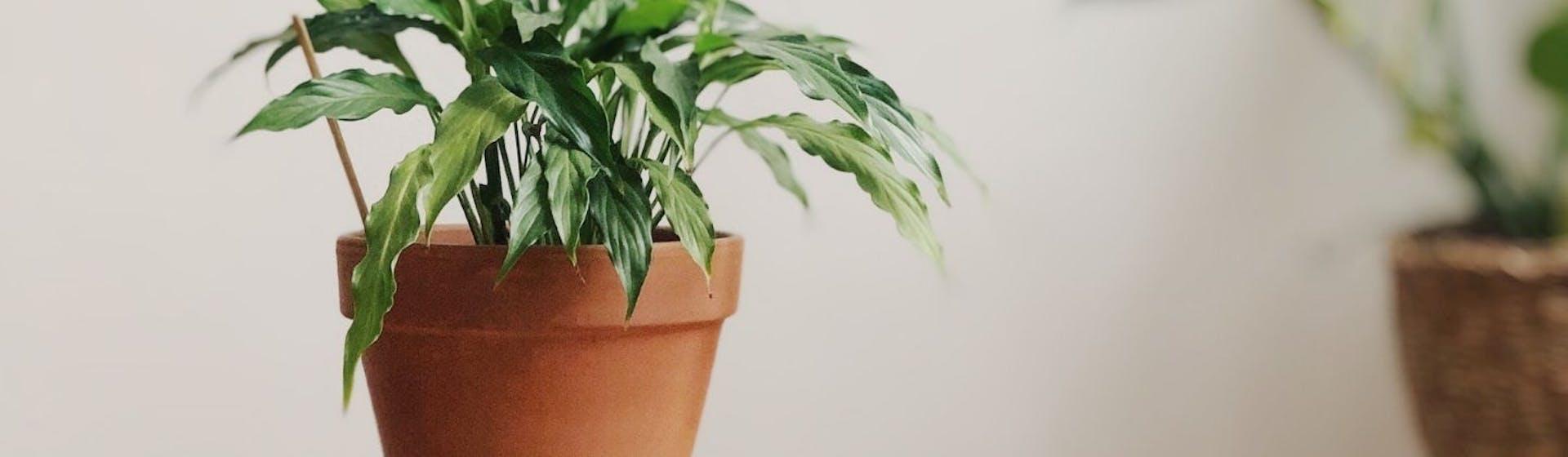 10 plantas de interior que necesitan poca luz para crecer
