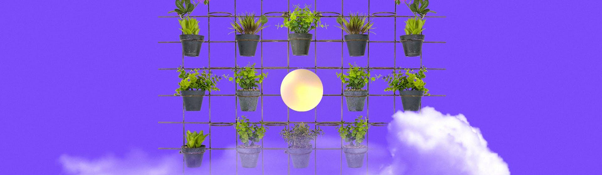 +10 plantas de exteriores para tu casa que no morirán jamás (al menos no en tus manos)