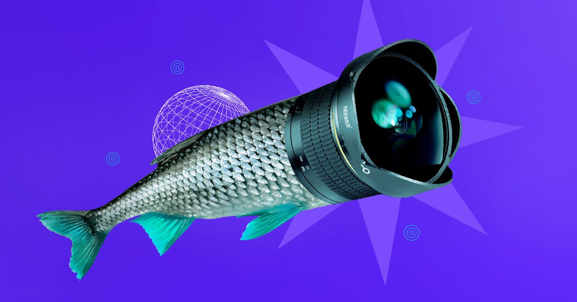 Lente ojo de pez: Ideas insuperables para sacar las mejores fotos