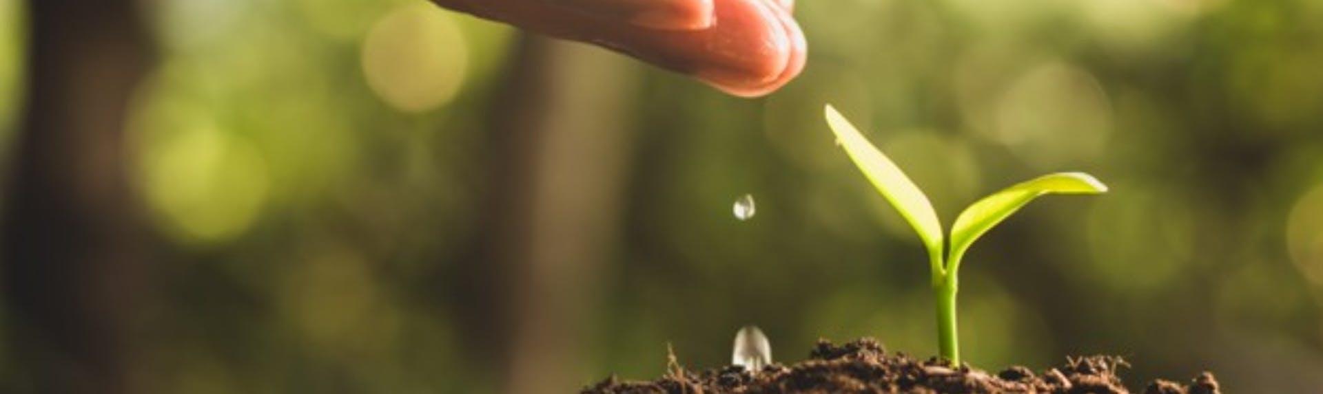 Emprendimiento ambiental: salvar al mundo también es rentable