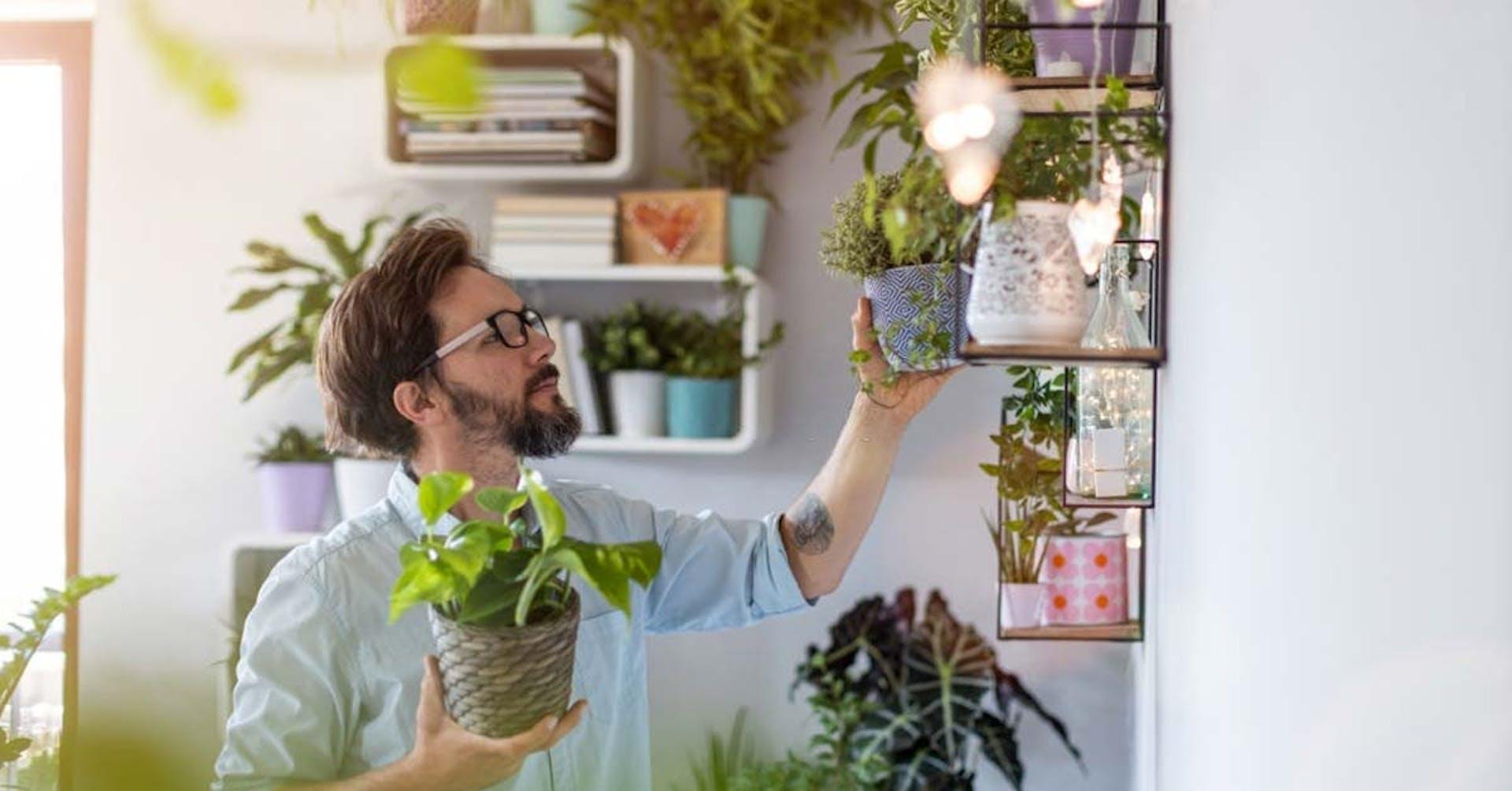 ¿Qué tipos de plantas existen? Deja que la naturaleza entre a tu hogar