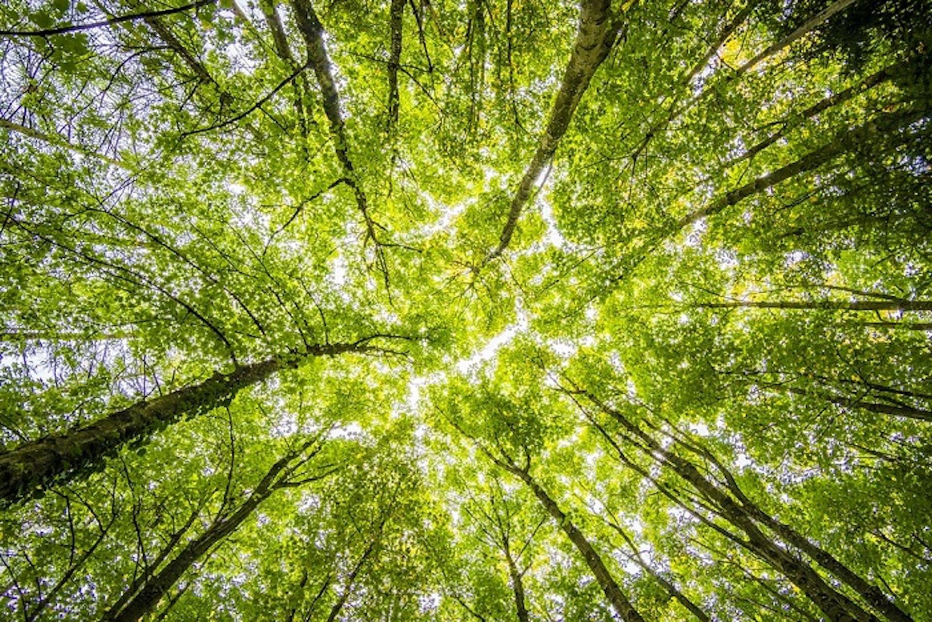 Estos son los tipos de árboles y sus nombres: ¿los conocías?