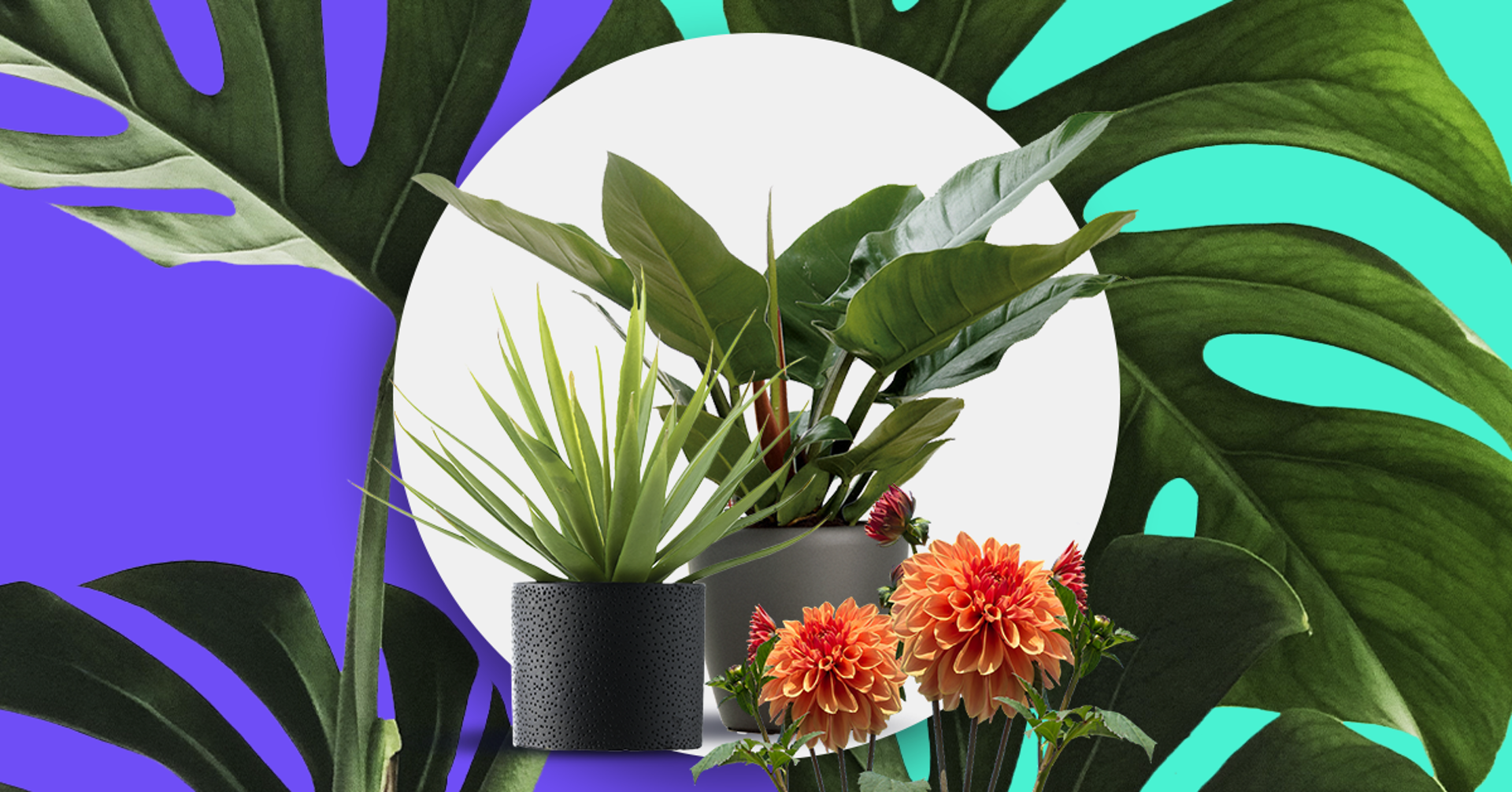¿Cómo cuidar las plantas? La guía que necesitas para que tus plantas crezcan felices
