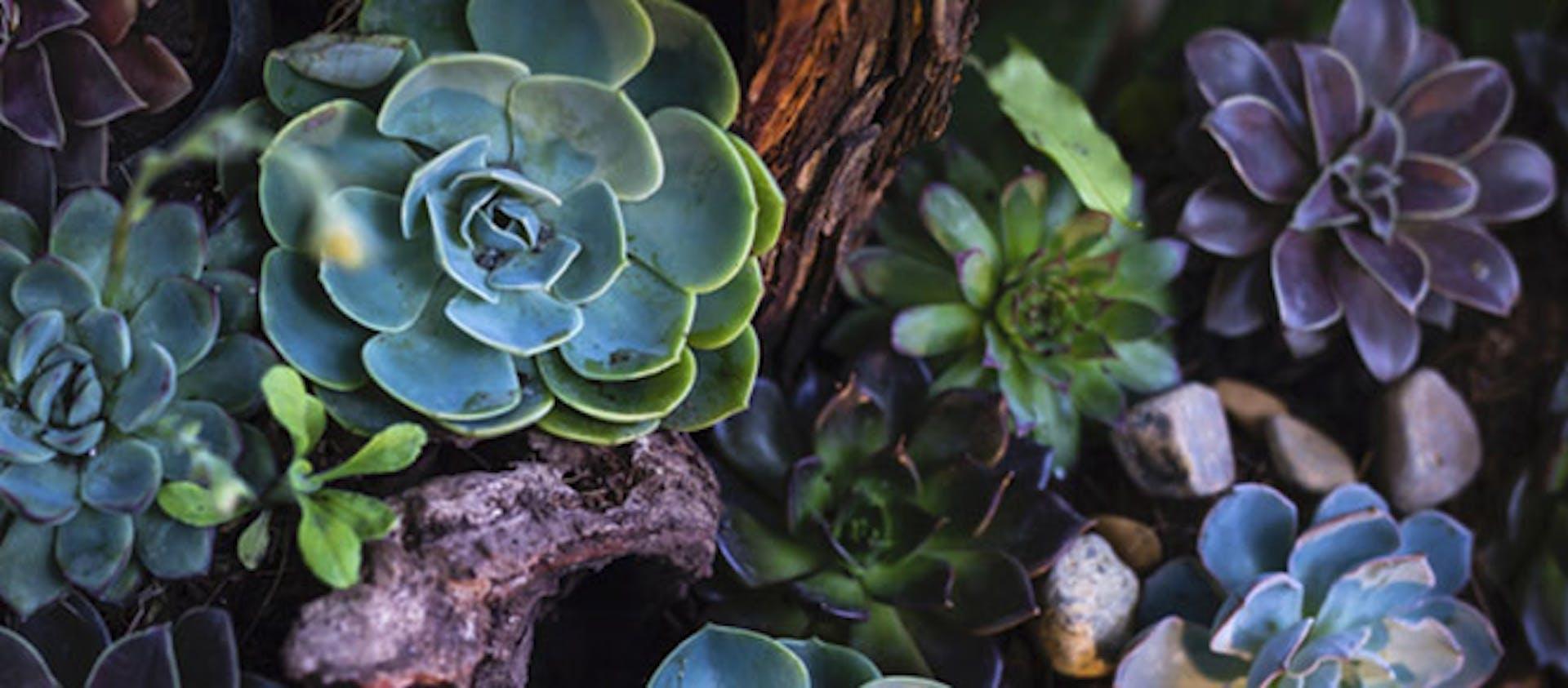 ¿Cómo tener un jardín bonito? Tips para el cuidado y mantenimiento de jardines