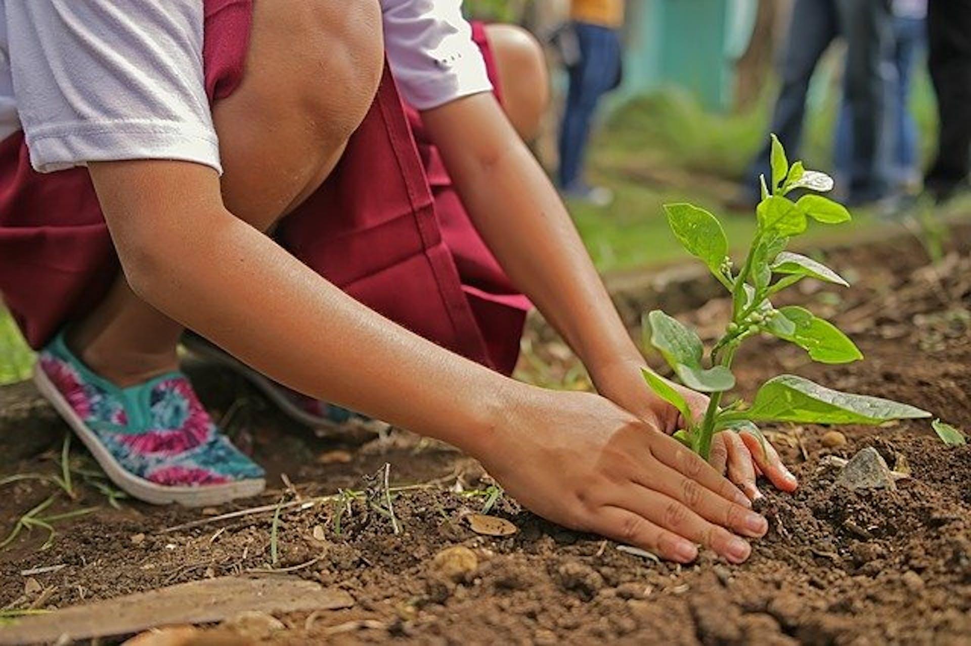 Materiales biodegradables con los que podrás remodelar tu jardín