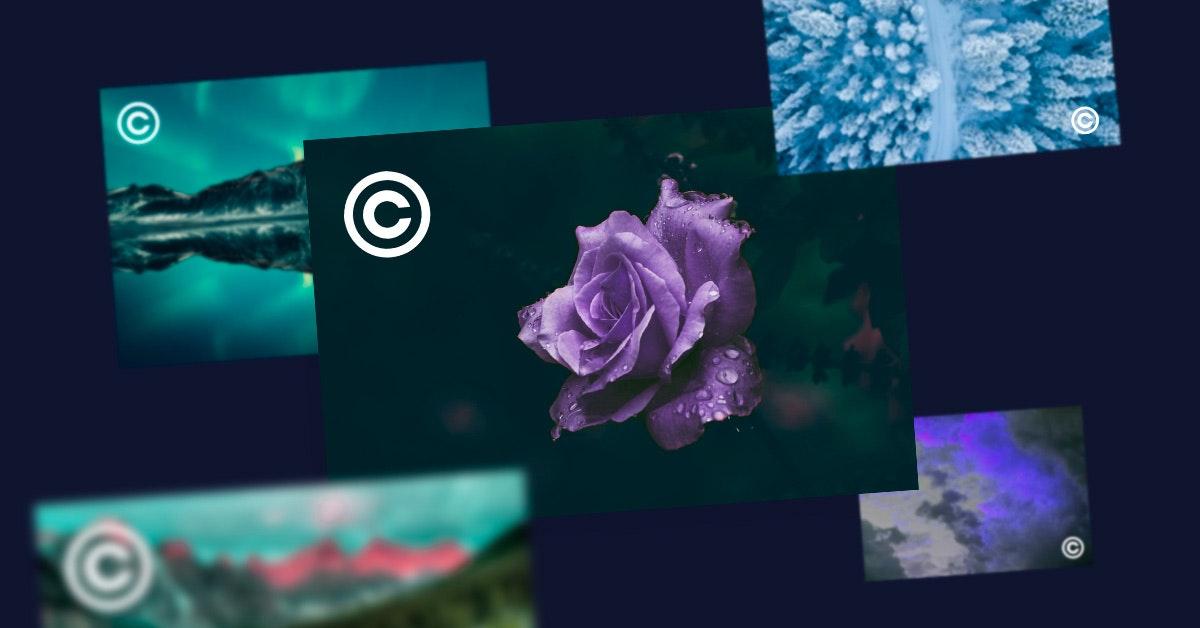 ¿Cómo saber si una imagen tiene derechos de autor? ¡Descúbrelo en sólo 3 pasos!