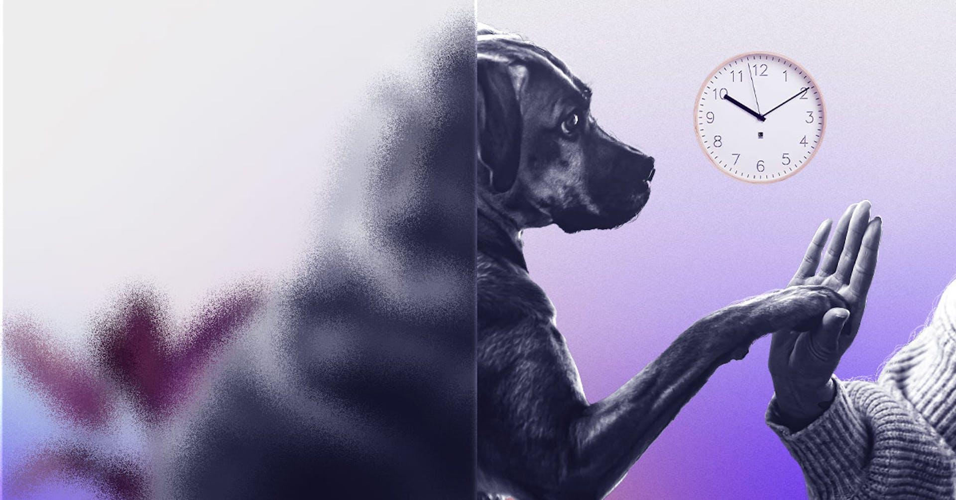 Los enormes beneficios de trabajar en una oficina pet-friendly