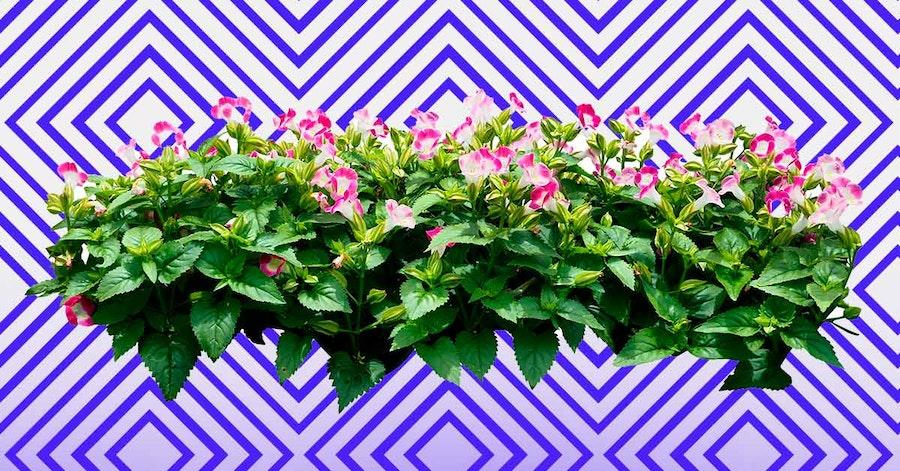 Plantas sin flores vs. plantas con flores: todo sobre tus favoritas