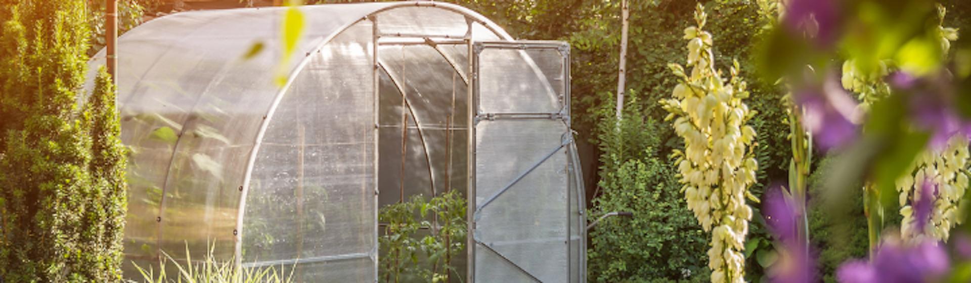 ¿Cómo hacer un invernadero casero? Cosecha tus alimentos sin gastar un sólo centavo