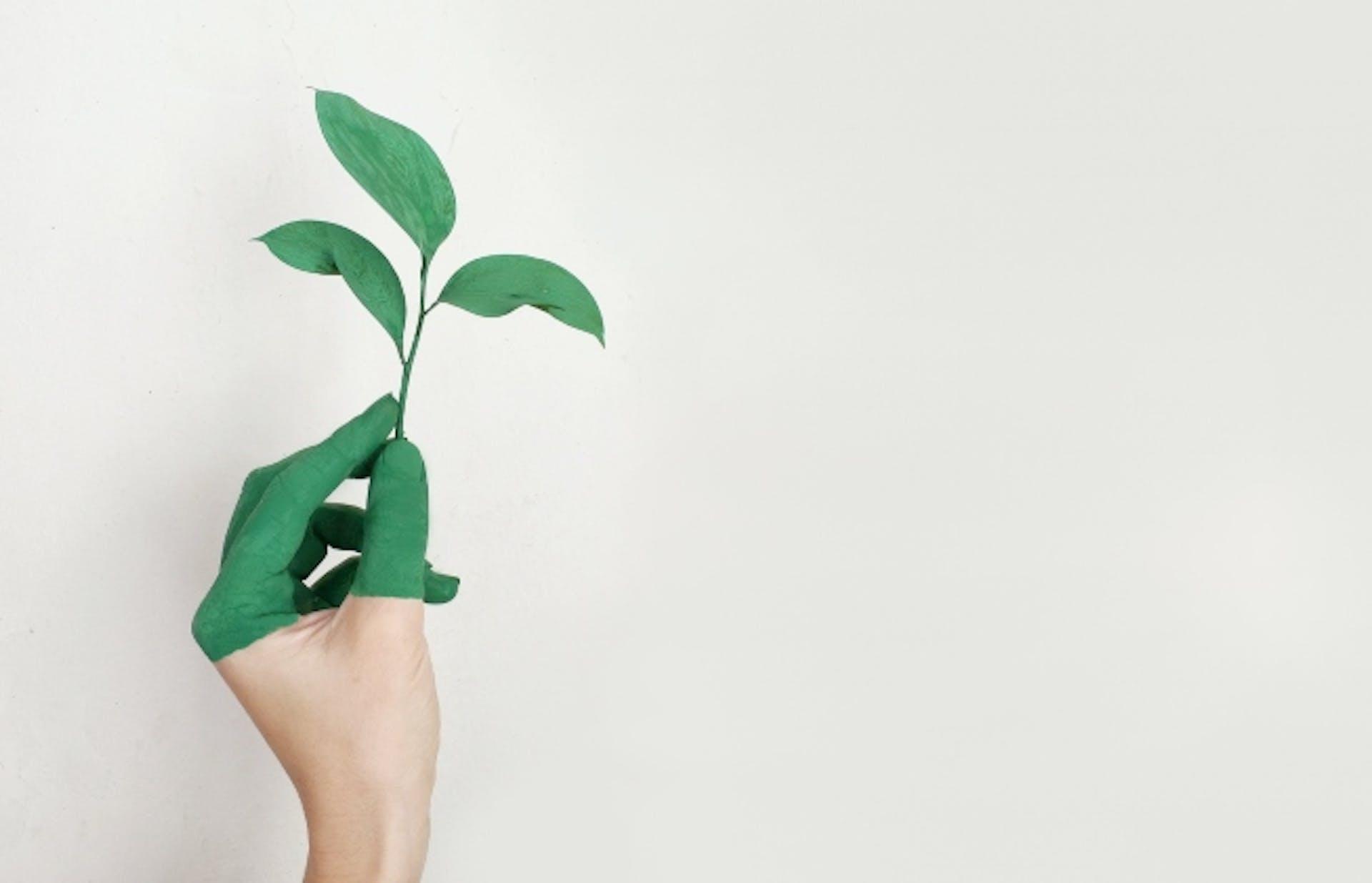 ¿El emprendimiento sustentable es el futuro? Vuélvete eco-emprendedor con estas ideas