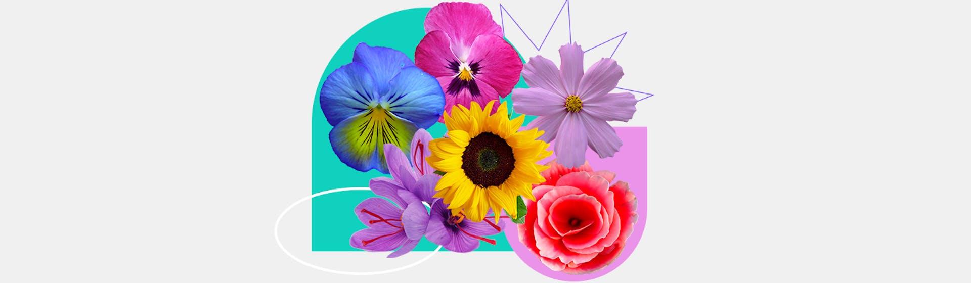 20 flores fáciles de cultivar en casa para amantes de la jardinería
